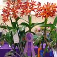 On The Road @ The San Diego Int'l Orchid Show
